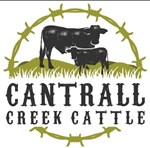 Cantrall_Creek_Cattle