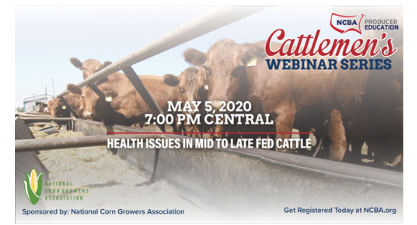 Health Issues in Mid to Late Fed Cattle